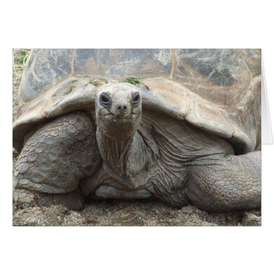 Galapagos Tortoise Card