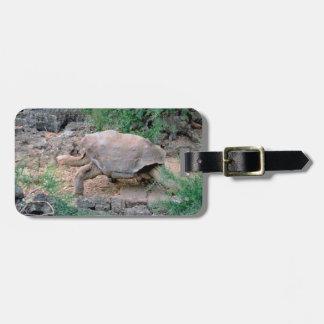 Galapagos Tortoise Luggage Tags