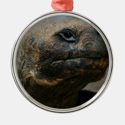Galapagos Tortoise Christmas Ornament