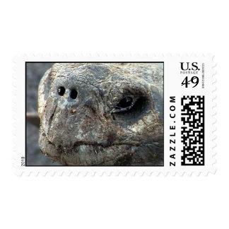 Galapagos Tortoise Postage