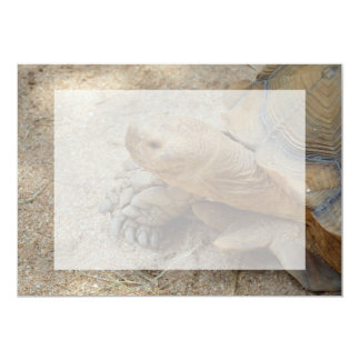 galapagos tortoise reptile animal 5x7 paper invitation card