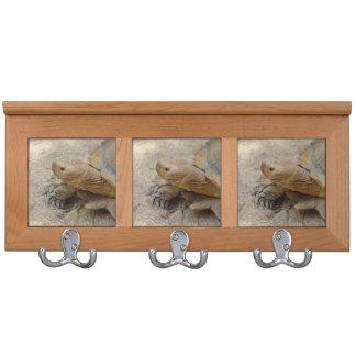 galapagos tortoise reptile animal coat racks