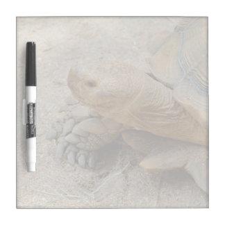 galapagos tortoise reptile animal Dry-Erase board