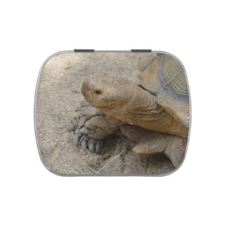 galapagos tortoise reptile animal jelly belly candy tins
