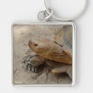 galapagos tortoise reptile animal keychain
