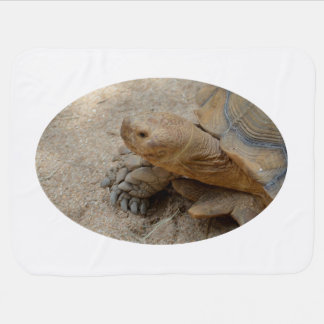 galapagos tortoise reptile animal receiving blanket