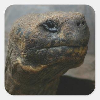 Galapagos Tortoise Stickers