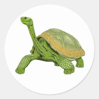Galapagos Tortoise Round Sticker