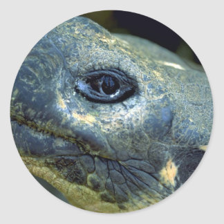 Galapagos Tortoise Stickers