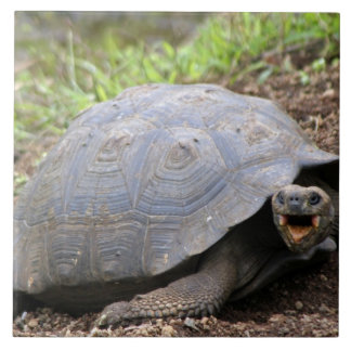 Galapagos Tortoise with mouth open Ceramic Tile