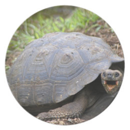 Galapagos Tortoise with mouth open Dinner Plate