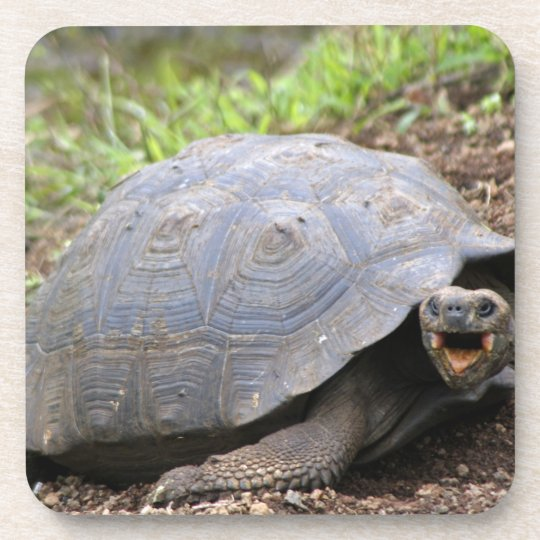 Galapagos Tortoise with mouth open Drink Coaster