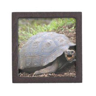 Galapagos Tortoise with mouth open Gift Box