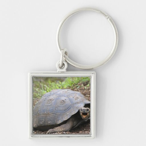 Galapagos Tortoise with mouth open Silver-Colored Square Keychain