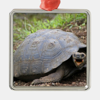 Galapagos Tortoise with mouth open Metal Ornament