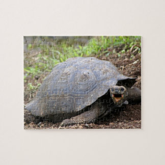 Galapagos Tortoise with mouth open Puzzles
