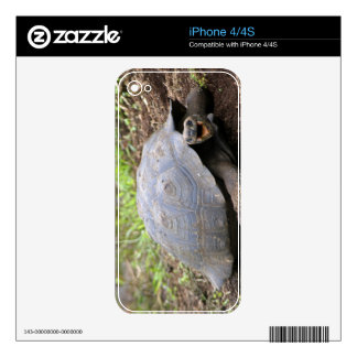 Galapagos Tortoise with mouth open Skins For iPhone 4S