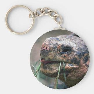 Galapagos Turtle, Galapagos Islands Keychain