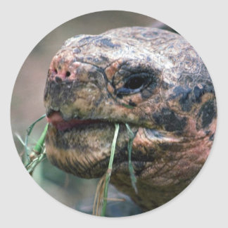 Galapagos Turtle, Galapagos Islands Round Stickers