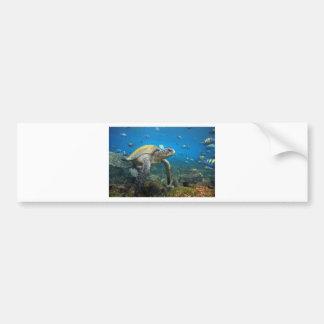 Galapagos turtles swimming in lagoon bumper sticker