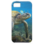 Galapagos turtles swimming in lagoon iPhone 5 cases