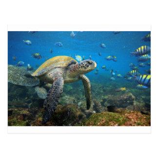 Galapagos turtles swimming in lagoon postcard