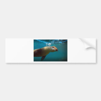Galapagos underwater curious sea lion paradise bumper sticker