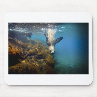 Galapagos underwater sea lion hang time mouse pad