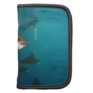Galapagos underwater Spotted eagle rays Folio Planner