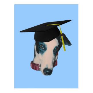 Galgo en postal divertida del perro del casquillo