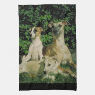 Galgo y toalla de cocina de los perritos