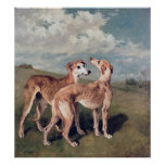 Galgos Póster