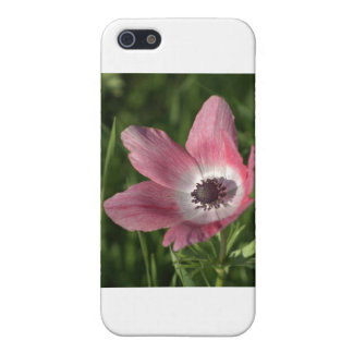 Galilee Anemone Calanit, Israel, Holy Land Case For iPhone SE/5/5s