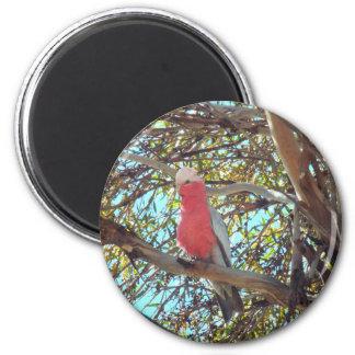 gallah salvaje imán redondo 5 cm