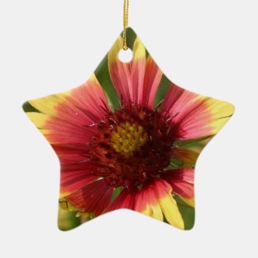 Gallardia Ornament