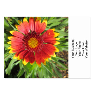 Gallardia Red Yellow Large Business Card