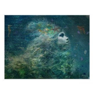Galleta de mar póster