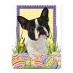 Galletas del huevo de Pascua - Boston Terrier Tarjetas Postales