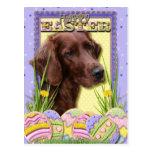 Galletas del huevo de Pascua - Irish Setter Postal