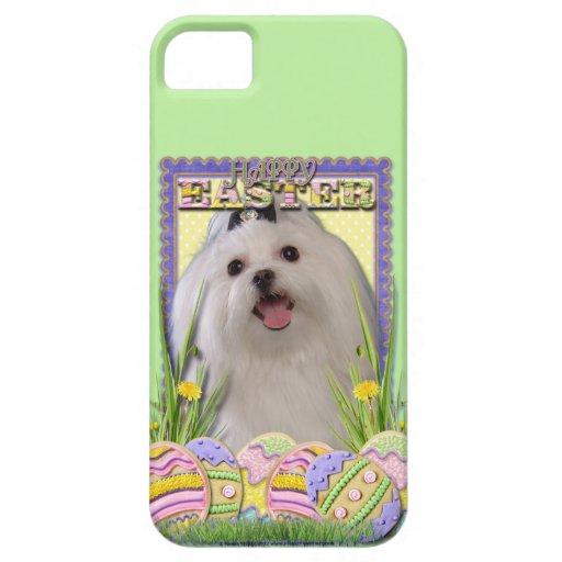Galletas del huevo de Pascua - maltesas iPhone 5 Case-Mate Carcasa