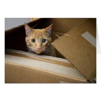 Galletas en una tarjeta del gatito de la caja
