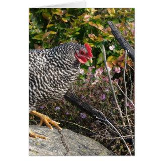 Gallina barrada de la roca tarjeta de felicitación