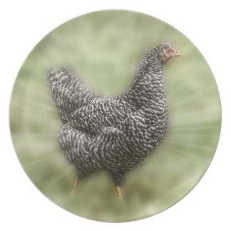 Gallina barrada jóvenes de Plymouth Rock del pollo Plato De Cena