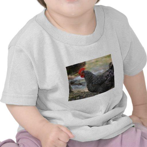 gallina camisetas