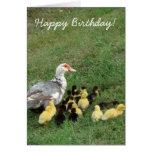 ¡Gallina con los anadones, feliz cumpleaños de Mus Tarjeta De Felicitación