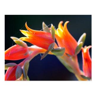 Gallina de Echeveria y flores de los polluelos Tarjetas Postales