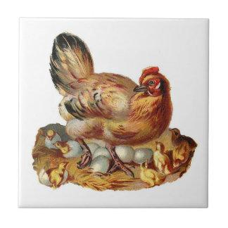 Gallina de la madre y teja de los polluelos
