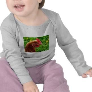 Gallina del rojo de Rhode Island Camiseta