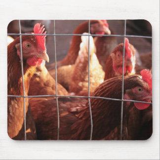 Gallina roja, gallo, pollo en la granja mouse pads