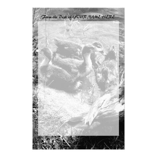 Gallina y anadones del pato de Muscovy blancos y n Papeleria